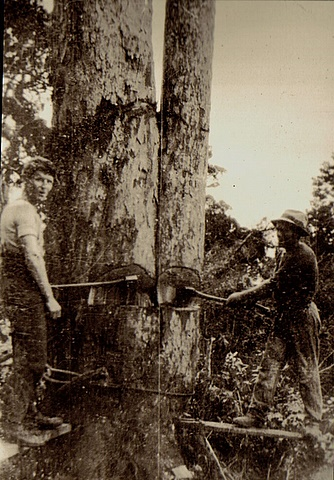 Charles cutting trees near Ratehi